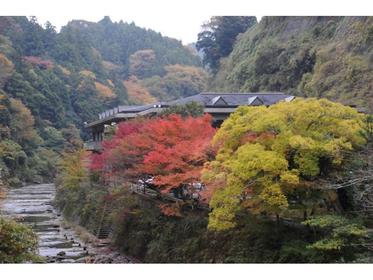 Mochinoki image