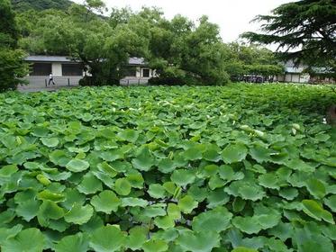 겐지이케 연못 image