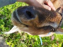 木曽駒森林公園 image