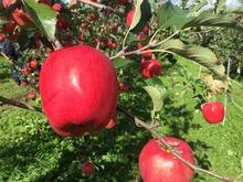 彌高神社 image