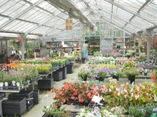 白兎海岸 image