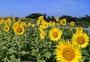 いっぷくせんべい半月庵 京都丹の国店 image