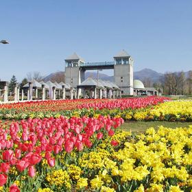 【前橋】日本のさくら名所100選・赤城南面千本桜を見に行こう!