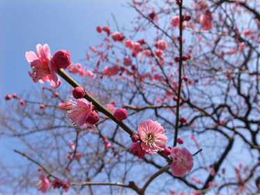 梅ヶ丘駅から春を感じる!梅が咲く羽根木公園から公園巡り