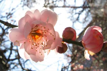 【墨田区】春を感じる!香梅園から公園巡り