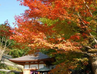 秋を感じる!鎌倉【紅葉】めぐり