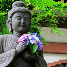 鎌倉あじさい巡り ~季節の移り変わりを感じる~