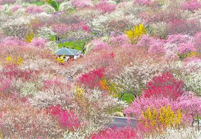 【東海エリア最大級】いなべ市農業公園の梅と自然博物館を散策!