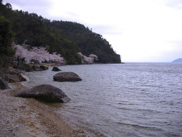 【日本一大きな湖・琵琶湖】湖西エリアの歴史と水辺散策