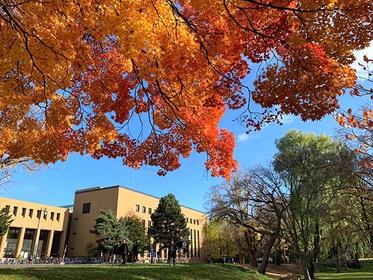 ポプラ並木が美しい「北海道大学総合博物館」。