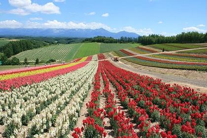 四季折々の花畑を楽しめる「四季彩の丘」