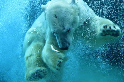 画像提供:旭川市旭山動物園