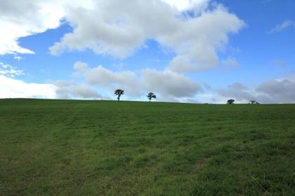 広大な草原が魅力のナイタイ高原牧場