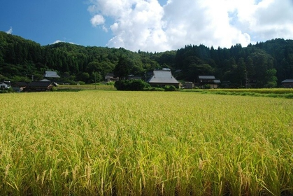 Japanese Rice as Food and Tradition