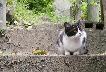広島・尾道の観光ルートプラン 猫に出会えるお散歩コース紹介 ロープウェイ情報