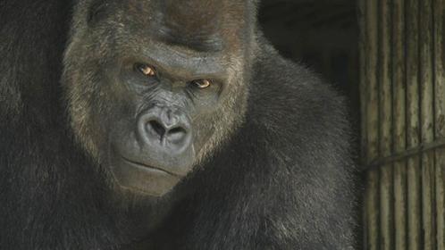 日本一動物の種類が多い動物園「東山動植物園」