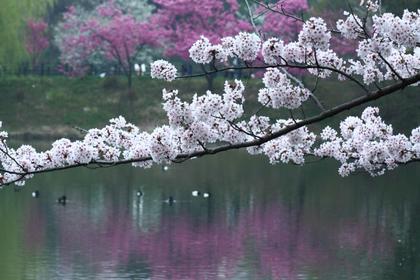7. Mitsuike Park (Kanagawa)