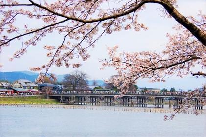 [2020] 일본 전국의 벚꽃 명소 랭킹 알아보기
