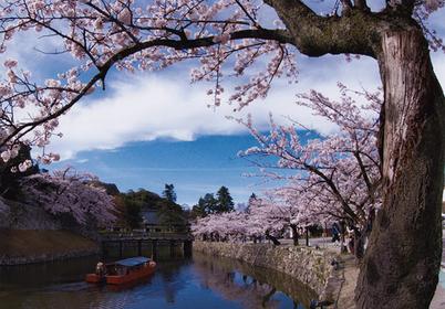 2019年日本赏樱景点人气排行榜