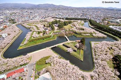 Goryokaku Park's cherry blossoms