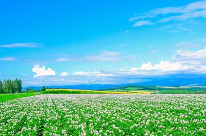 新手必看!【北海道】各地觀光景點、美食名產、交通方式總整理