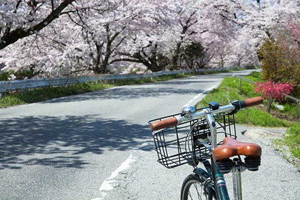 Hikone City - Bicycle Sightseeing Itinerary