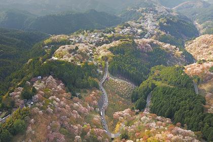 Yoshino Overview