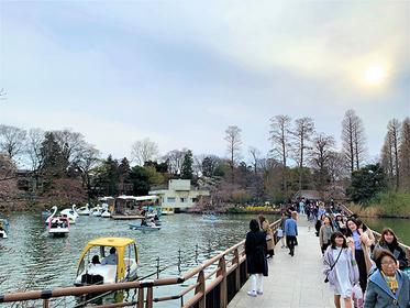 Top 15 Activities in Kichijoji