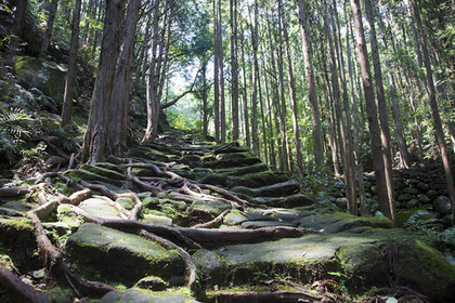 Trekking along the Kumano Kodo