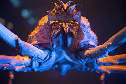 Japan Below Sea Level, the Country's 5 Best Aquariums