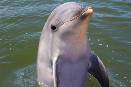 Shimoda Aquarium - Dolphin