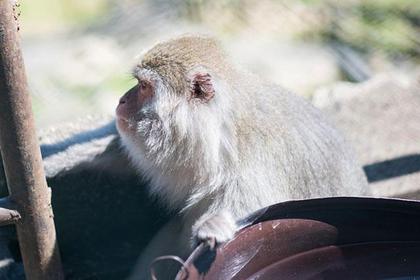 Osarunoyama Monkey Park, Nikko