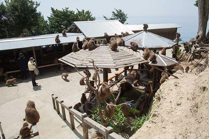 Awajishima Monkey Center