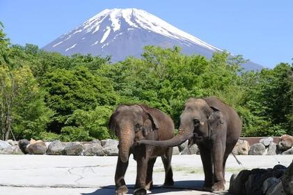 <富士山の裾野を爽快ドライブ>南富士エバーグリーンラインコース