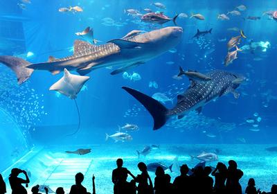 "Northern Okinawa road trip visiting islands and ""Okinawa Churaumi Aquarium"""