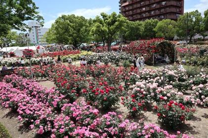 장미 공원 image