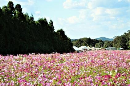 Refresh Park Toyoura image