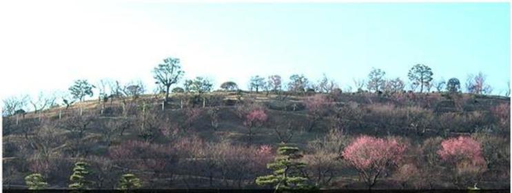 冠山綜合公園 image