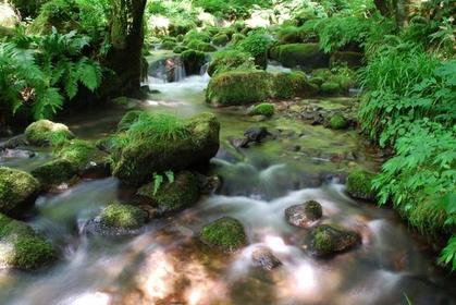木谷泽溪流 image