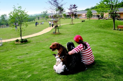 Communication park for dogs and people image