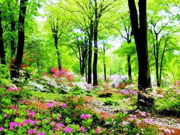 赤城自然園 image