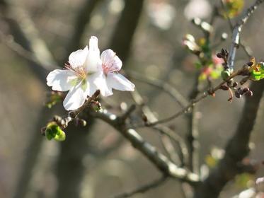 桜山公園 image