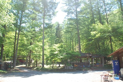 皇海山 Camp Forest image
