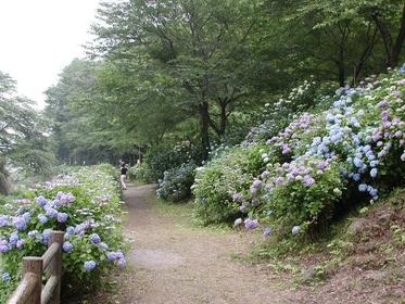 小野池あじさい公園 image