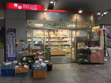 쓰쿠바노 요이시나 image