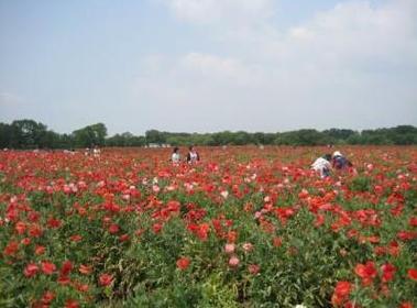 고카이가와 후레아이 공원 image