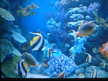 Kingham 3D童话水族馆 image
