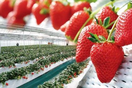 那须高原农场草莓之森 image