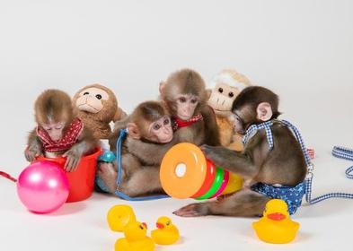 닛코 원숭이 군단 image