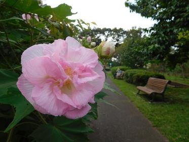 치바시 도시 녹화 식물원 image